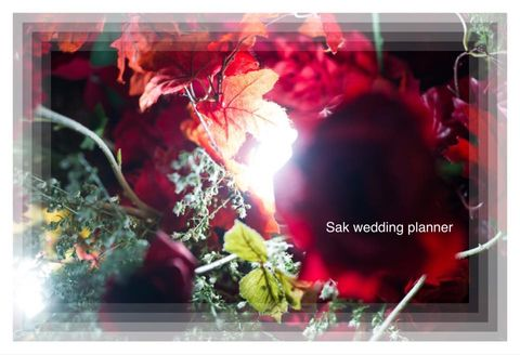 Sak WeddingPlanner